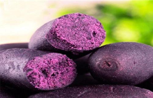 广州紫薯全粉价格
