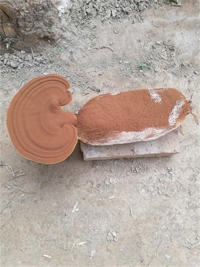 湖南灵芝孢子粉厂
